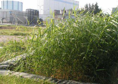 Danone-traitement-des-boues-ifb-environnement-1