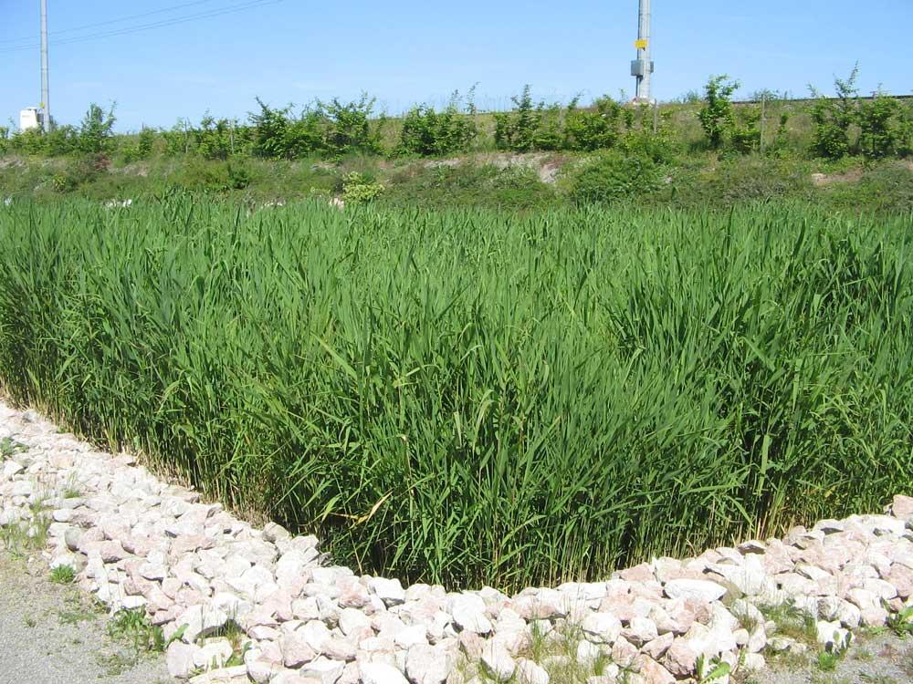 procedes-vegetalises-ifb-environnement-4