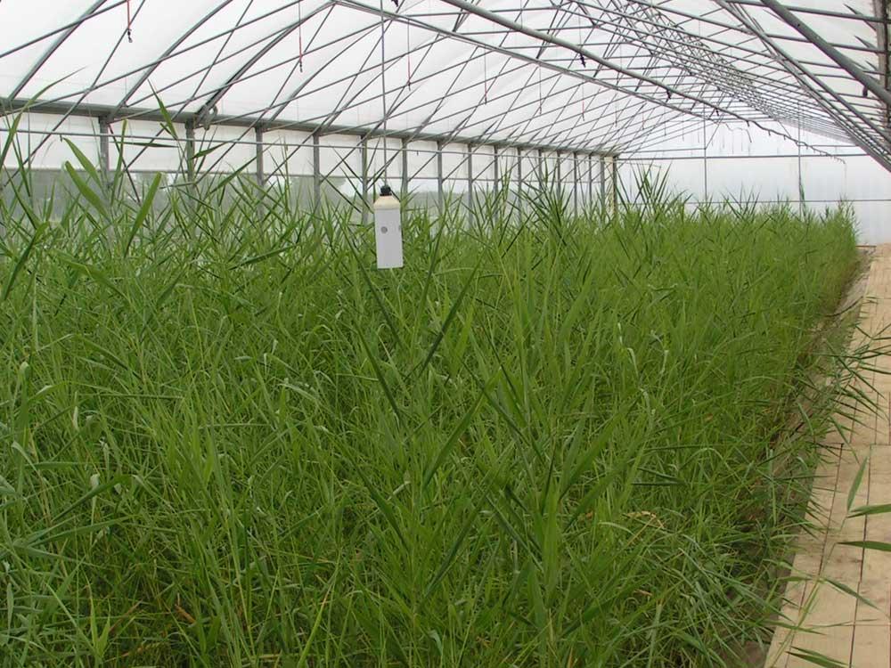 procedes-vegetalises-ifb-environnement-6